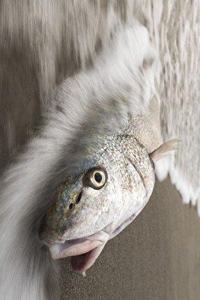 Balık, 60x60, Fotoğraf