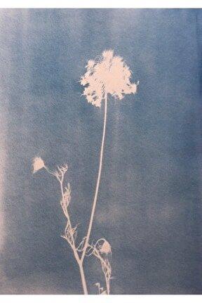 Bağ Serisi, 47x40, Cyanotype