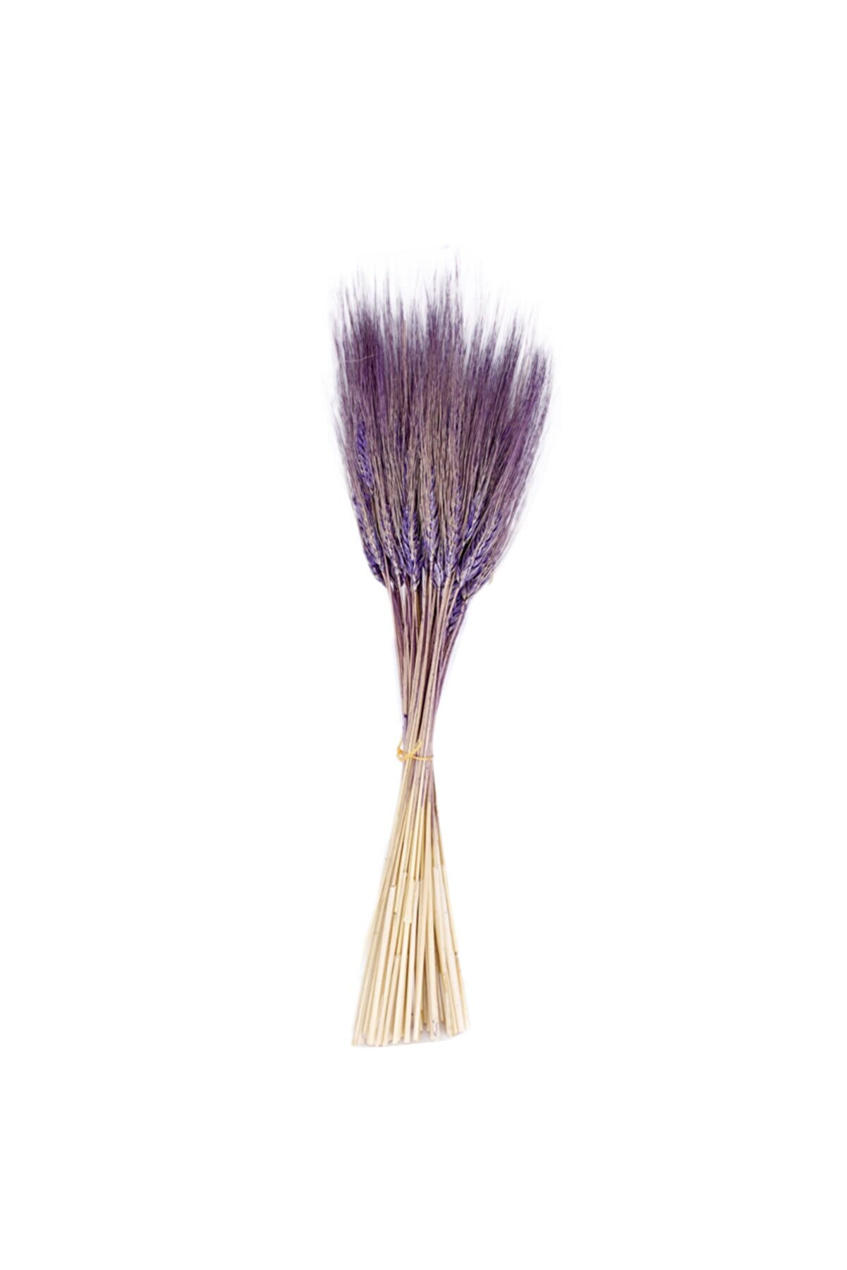 Eminonutoptanci Kuru Çiçek Doğal Başak Buğday Başağı 45 cm - 1 Demet Lila