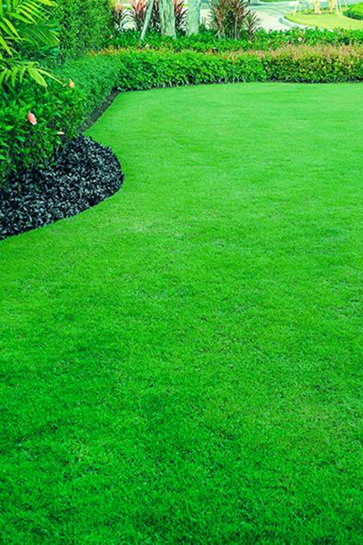 AGROERA Ithal Çim Tohumu Özel 6 Lı Karışım Basmaya Dayanıklı 7 Günde Çimlenir 1 Kg