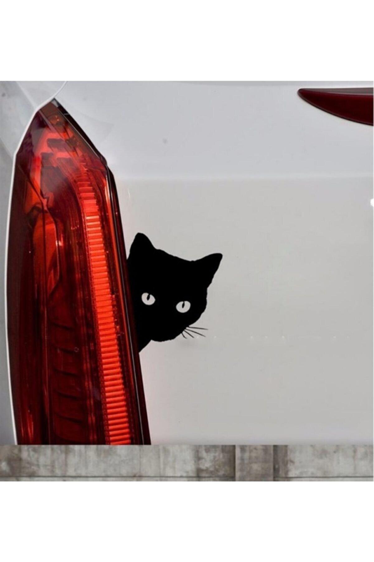 TSC Sevimli Kedi Z Araba Sticker  Yapıştırma