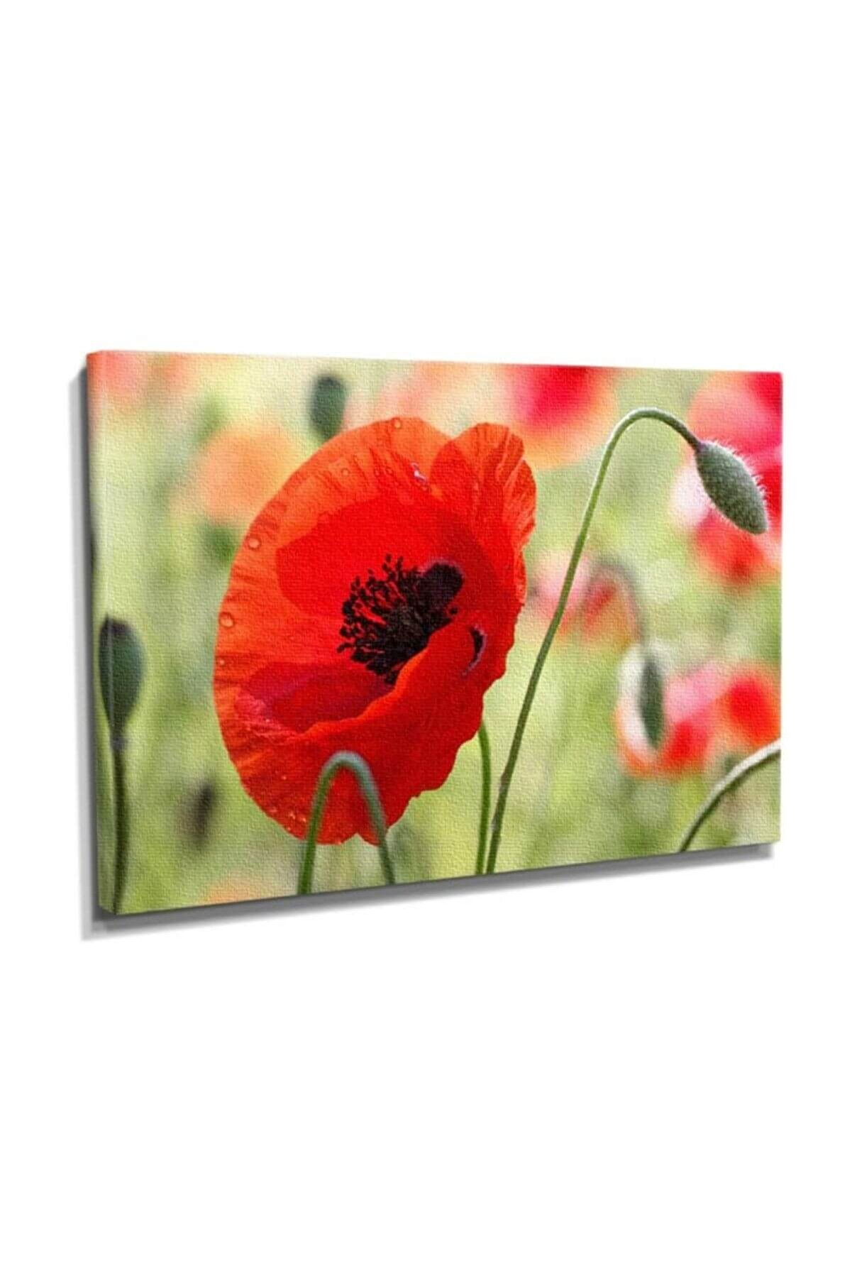 Dekor Sevgisi Gelincik Canvas Tablo  60x40 DTC145301364