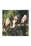 Nettenevime Yapay Kuş Serçe 10 Cm 12 Adet Li Kutu