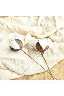 fekarehome Beyaz Doğal Pamuk Dalları 6 Adet