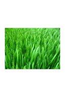 Agrobazaar Çim Tohumu 1 Kg