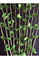 AYDUĞAN ZÜCCACİYE Kapı Süsü Yeşil Renk Yaprak Bambu Boncuk 90x180