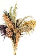 Dekolia Pampas - Kuru Çiçek 15 Adet 100 Cm Karışık Renkli