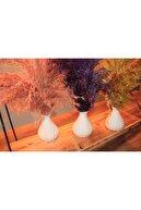 BUNNY&HOME 3'lü Saksılı Dekoratif Pampas Papay Çiçek