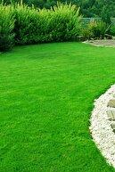 AGROERA Ithal Çim Tohumu  6 Lı Karışım- Basmaya Dayanıklı 7 Günde Çimlenir 2 kg