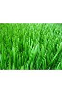 3M Trend Store 7li Karışım Çim Tohumu 1 Kg Aynı Gün Kargo