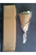 Decolass Kuru Çiçek Şoklanmış Cipso Beyaz 45 cm
