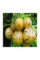 Çam Tohumculuk Nadir İthal Pepino Tohumu 5 Adet Tohum Pepino Meyvesi Tohumu