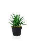 çiçekmisin Siyah Mini Plastik Saksıda Yapay Aloe Vera Çiçeği