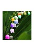 Çam Tohumculuk Nadir Çan Orkide Tohumu 5 Adet Tohum Çiçek Tohumu