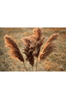 Biblio Dökülmeyen Şoklanmış Kuru Çiçek Pampas / 20 Adet - 70 cm
