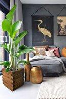 Grootland Dekoratif Ahşap Saksı Çiçeklik