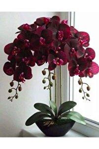 Kadife Kırmızı Renkli Orkide Çiçeği Tohumu-10 15adet