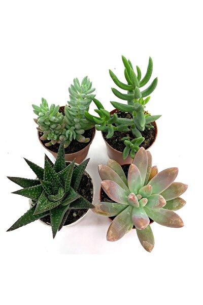 ÇiçekAntalya 4'lü Teraryum Sukulent Kaktüs