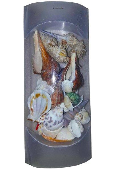 İnşirah Concept Karışık Deniz Kabuğu Dekor Süsleme Sanatsal Aktivite Paket Deniz Kabukları (paket Boyutu :20x9 Cm)