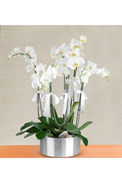 ata tohumculuk Nadir Bulunan Beyaz Orkide Çiçeği Tohumu 10 Adet