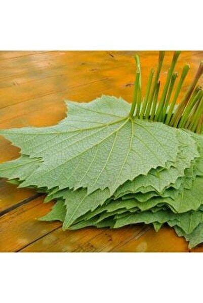 Tüplü Yapraklık Sarmalık Dolmalık Üzüm Asma-bağ Fidanı