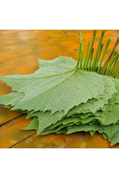 ADA TARIM Tüplü Yapraklık Sarmalık Dolmalık Üzüm Asma-bağ Fidanı