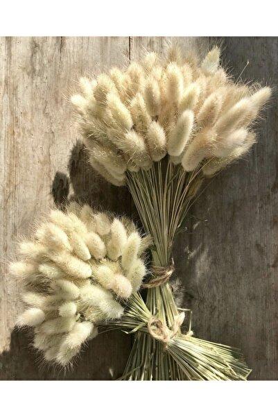 Monyer Dogal Dekoratif Pamuk Bitki
