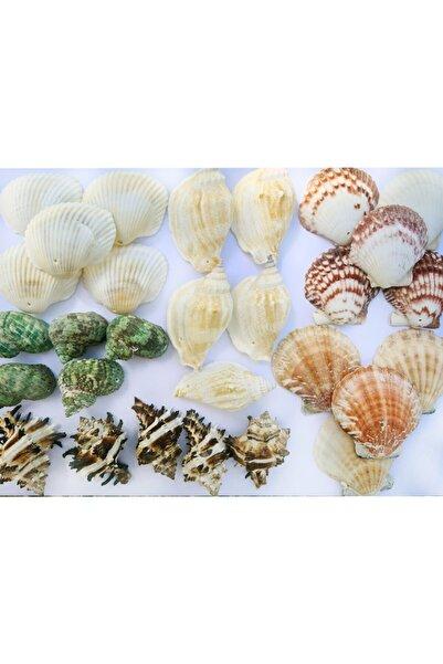 Turkuaz hediyelik Delikli Deniz Kabuğu Seti-30 Adet