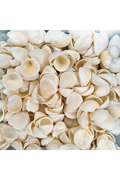 Turkuaz hediyelik Deniz Kabuğu 500 gr Paket Clam Rose Cochles -orta
