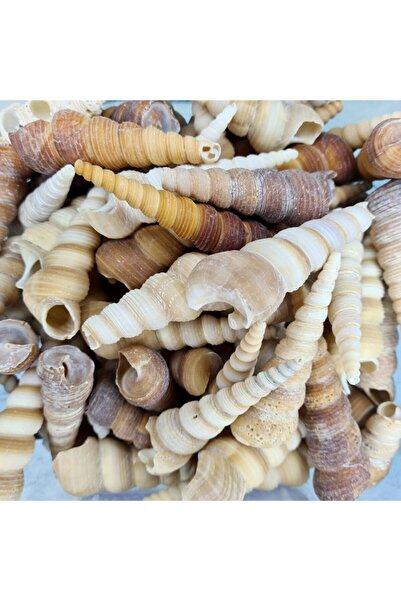Turkuaz hediyelik Gerçek Deniz Kabuğu 250 Gr Paket Turıtella