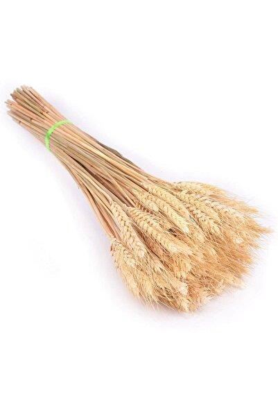 Nettenevime Kuru Çiçek Doğal Başak Buğday Başağı