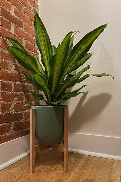Alyones Modern Bitki Standı, Insansı Saksı