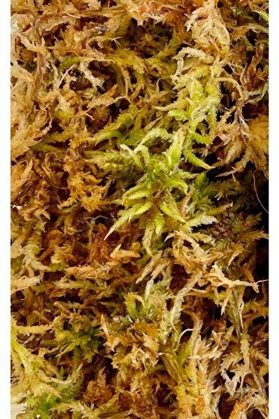 SLD BOTANIK Sphagnum Peat Moss (spagnum Yosunu) 1 Litre