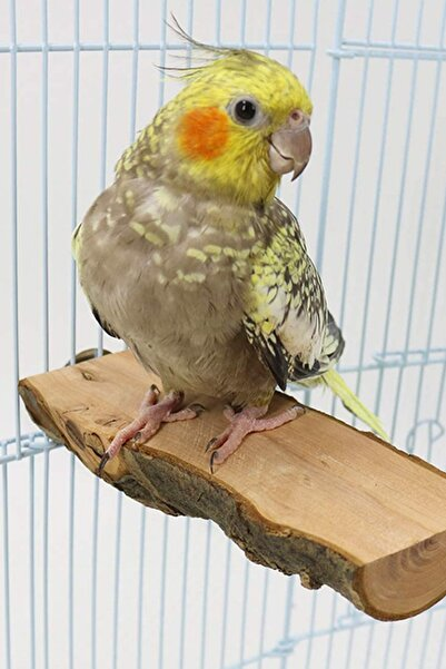 Alyones Muhabbet Kuşları Vb. Doğal Ahşap Kuş Tüneği