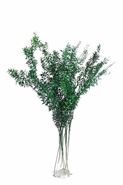 Dekorsende Kurutulmuş Ruskus Kokina Demeti Koyu Yeşil