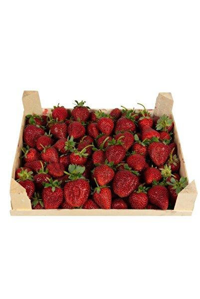 Topraktan Tarımsal Gıda Organik Bahçeden Taze Çilek 1 kg