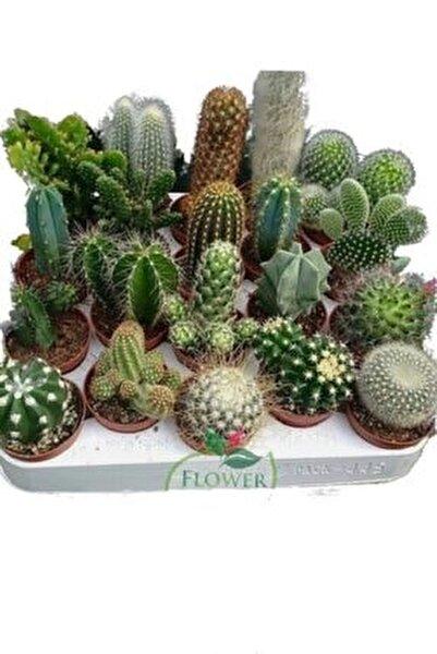 8 Adet Kaktüs Seti Birbirinden Farklı Karışım Bitkiler