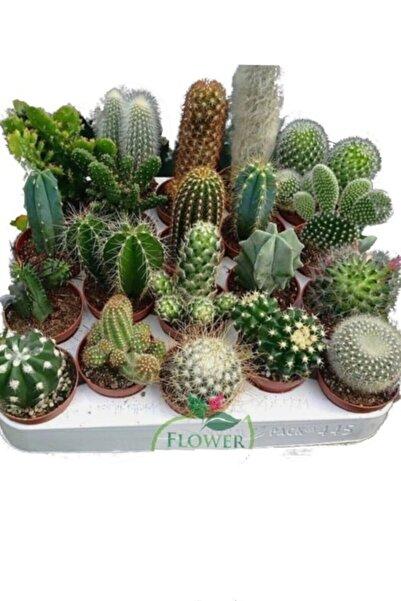 EGE GARDEN 8 Adet Kaktüs Seti Birbirinden Farklı Karışım Bitkiler