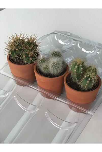 My Succulent Hediyelik Kaktüs 3'lü Şeffaf Blister Içinde Ve Seramik Saksıda