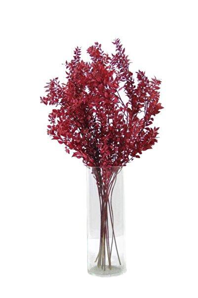 Dekorsende Kurutulmuş Ruskus Kokina Demeti Kırmızı