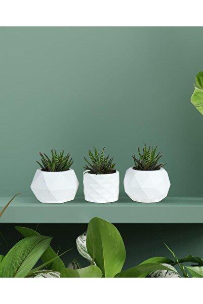 yaka dizayn 3'lü Beyaz Renk Beton Sukulent Ve Kaktüs Saksı Seti
