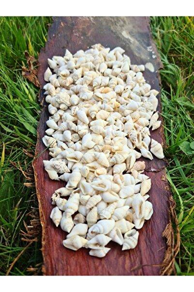 Turkuaz hediyelik Deniz Kabuğu 100 Gr Paket Nassa Shell - Beyaz