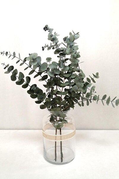Kuru Çiçek Deposu Şoklanmis Küçük Yeşil Okaliptus Demeti