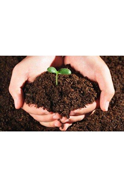 Bereket Toft Toprak- Doğal Humuslu Saksı Toprağı 10 Litre-mikro Element Katkılı