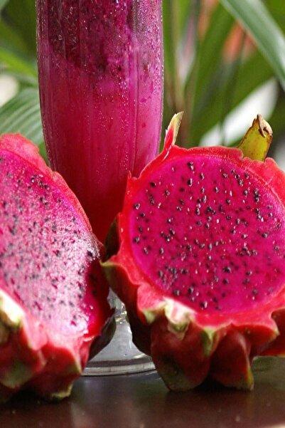 EYMA TARIM Kırmızı Pitaya Dragon Ejder Meyvesi Çelik Fidanı. Hediyeli(boy 20-30cm)