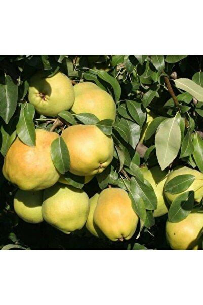 Önderler 5 Li Meyva Paketi ( 1 Deveci Armutu 1 Vişne 1 Kırmızı Elma 1sarı Elma 1 Tatlı Nar )