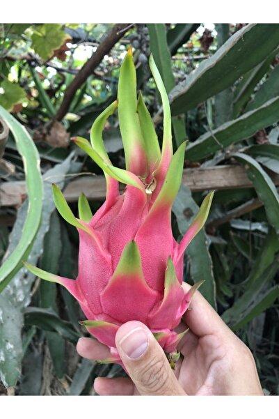 TaptazeCo Organik Dalından 2 Kg Karışık Kırmızı & Beyaz Taze Ejder Meyvesi Pitaya Tptz2