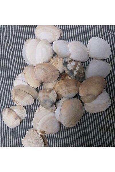 BAYANES Gerçek Deniz Kabuğu Büyük Boy 3,5 4 cm