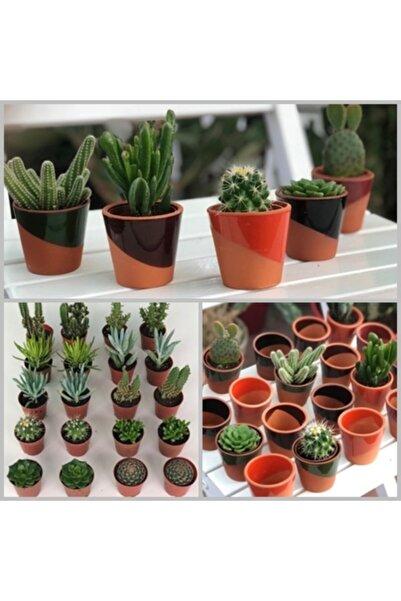 My Succulent 20 Seramik Saksılı + 20'li Karışık Kaktüs Sukulent Set ( 2'şerli Mix 5,5 Cm'lik Saksıda Bitkiler)