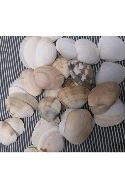 BAYANES Gerçek Deniz Kabuğu Orta Boy 100 Adet
